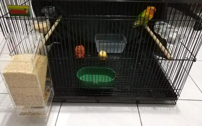 4 Jenis Makanan Agar Burung Lovebird Ngekek Panjang