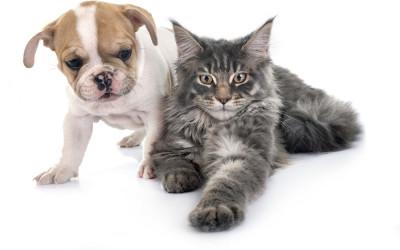 Di Belanda, Anjing dan Kucing ikut-ikutan Kena Corona