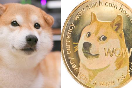 Shiba Inu Lambang Dogecoin, Anjing Petualang Sekaligus Lembut
