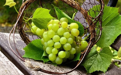 Jangan Dibuang, Manfaat Biji Anggur Ternyata Sangat Dahsyat