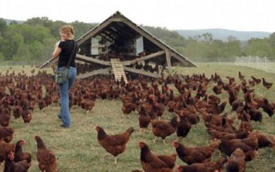 Dorong Industri Perternakan, JAPFA Bangun Research Farm di UGM