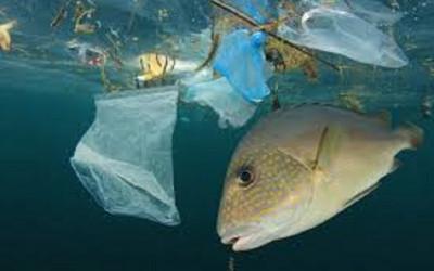 Hasil Penelitian, Kita Mengonsumsi Ikan Mengandung Plastik