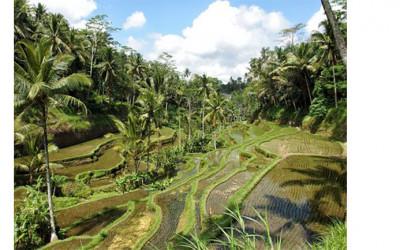 Bali Masuk 10 Besar Destinasi Pengalaman Liburan Terbaik Dunia