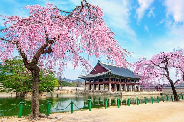 Ilustrasi Istana Gyeongbokgung, Korsel, saat musim semi. Foto: freepik