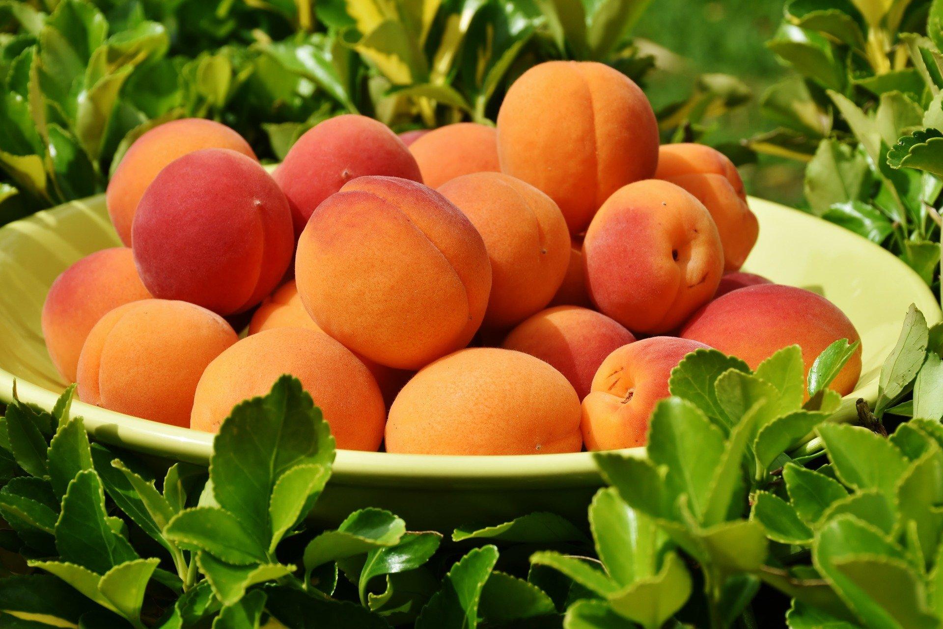Ketika mendengar nama buah Persik, maka yang terngiang di pikiran adalah aktris Dewi Perssik bukan? (foto: pixabay)