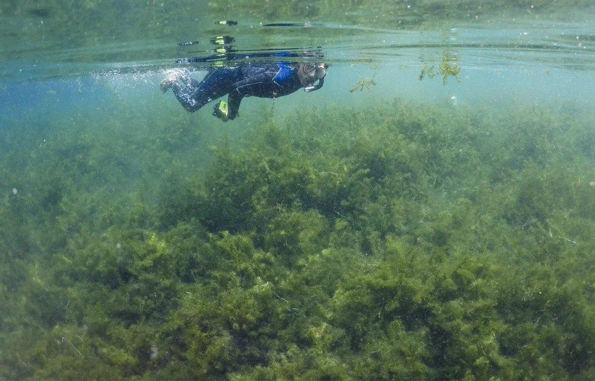 Sensasi berenang di kolam alam Telaga Cisaladah. Foto: Antara.