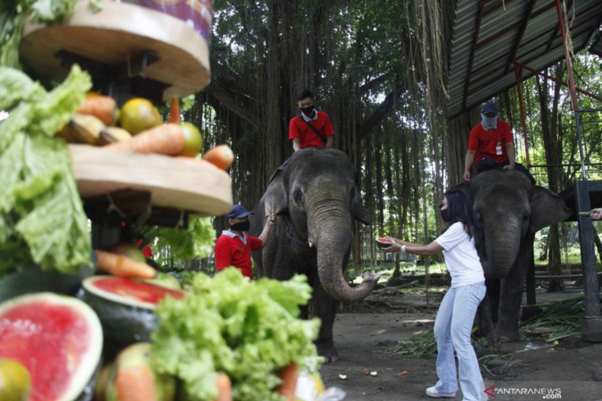Pelonggaran Aturan, Kunjungan Solo Zoo Meningkat