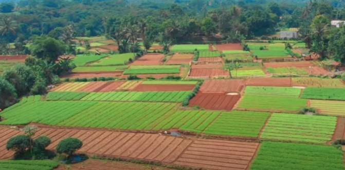 Sukses Usaha Sayur Organik, Sarjana Ini Bagi Pengalaman ke Dunia
