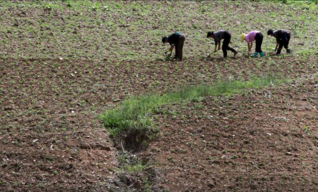 Ilustrasi: Senuah lahan pertanian di sisi Sungai Yalu di desa Sackhu Provinsi Phyongan Utara Korea Utara. Foto diambil pada tahun 2015 Korea. (Foto: Reuters/Jacky Chen)