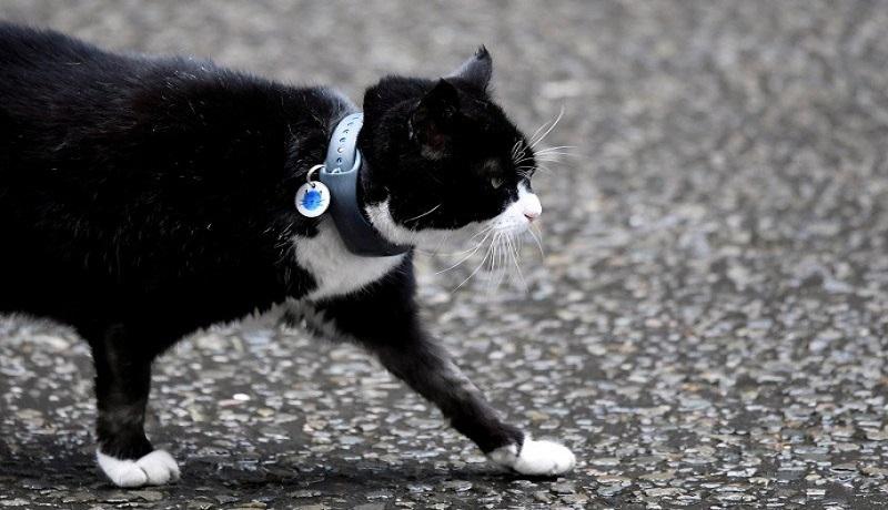 Seekor Kucing Pensiun dari Kantor Kementerian Luar Negeri