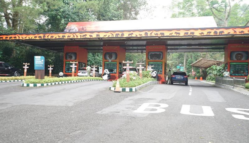 Yuk Liburan, Taman Safari Bogor Sudah Dibuka