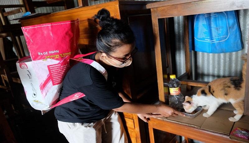 Relawan pecinta satwa menyisir kucing liar untuk diberi makan. Foto: Antara