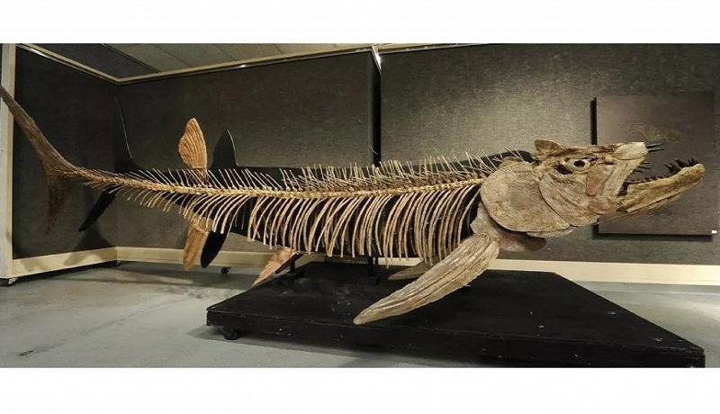 Fosil Ikan Predator Raksasa Berusia 70 Tahun Ditemukan