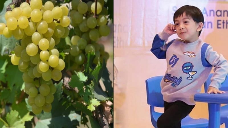 Jan Ethes menjadi salan satu varietas unggulan tanaman anggur (foto: Kementan dan IG @janethesss)