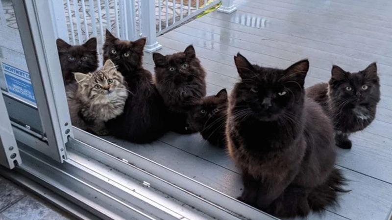 Terharu! Kucing dan 6 Anaknya Minta Bantuan pada Wanita Baik Ini