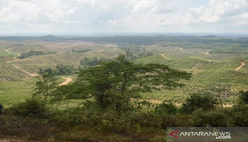 Ini lokasi Istana Kepresidenan di Kecamatan Sepaku, Kabupaten Penajam Paser Utara, Kalimantan Timur. Foto: Antara
