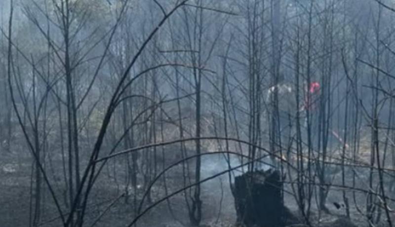 Kasus kebakaran hutan dan lahan di Riau polisi tetapkan 31 tersangka. (ist)