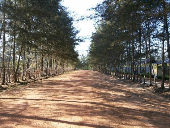 Bangka Botanical Garden Wisata Di Belitung Yang Bikin