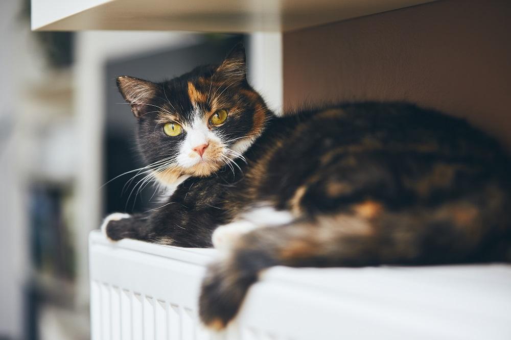 Ilustrasi kucing. (Foto: Elements Envato))
