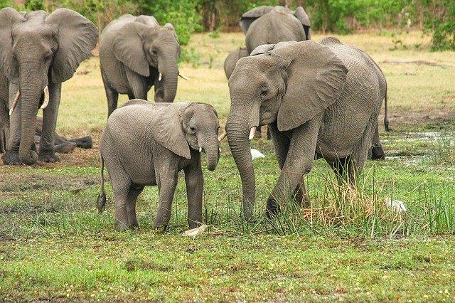 Mengerikan, Ratusan Gajah Mati Misterius