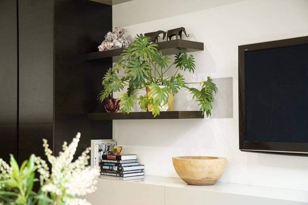 Selain Jadi Dekorasi Rumah, Tanaman Manfaatnya Segudang