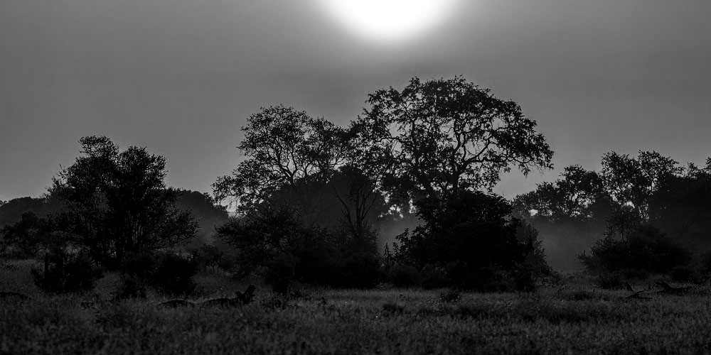 Ilistrasi hutan. (Foto: Elements Envato)
