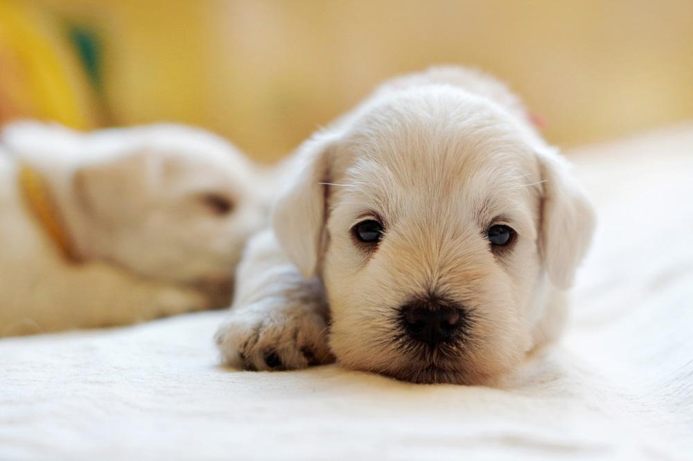 Ilustrasi anak anjing. (Foto: Elements zenvato)
