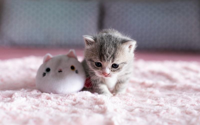 Ketahui Lebih Lanjut, Perbedaan Gigitan Kutu Kucing Dan Nyamuk