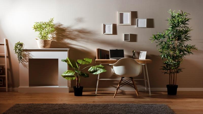 Menghadirkan tanaman membuat ruangan menjadi sejuk, meski tanpa AC(foto : Freepik)