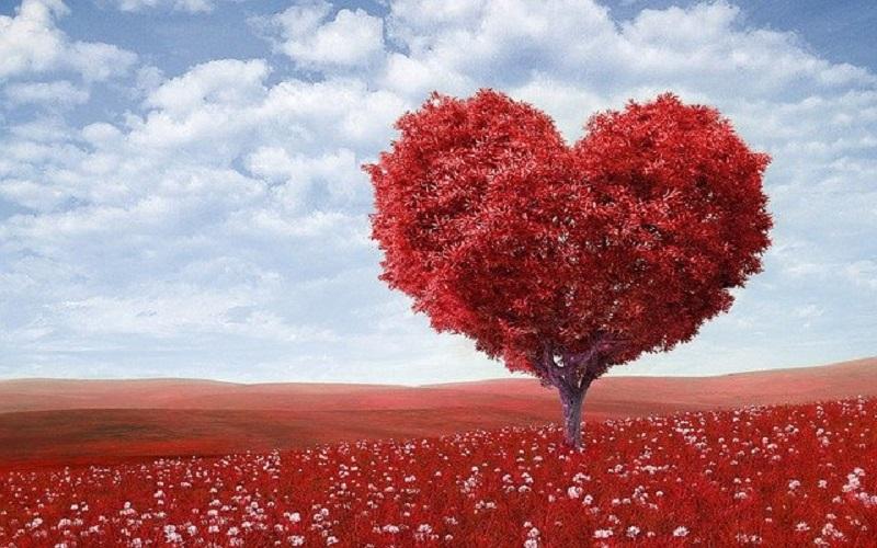 ilustrasi: Kunci Memahami Sebuah Cinta, Bukan dari Pengalaman ( foto: pixabay)