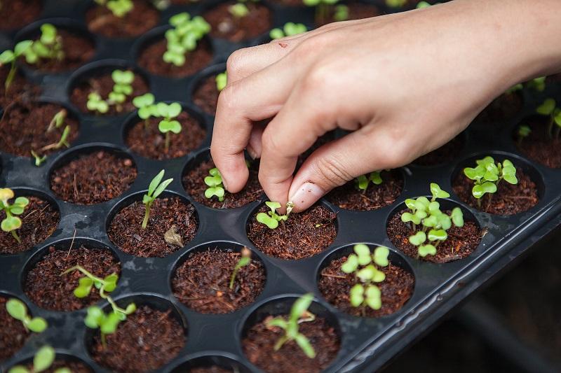 Urban Farming, Makin Diminati di Tengah Pandemi Covid-19