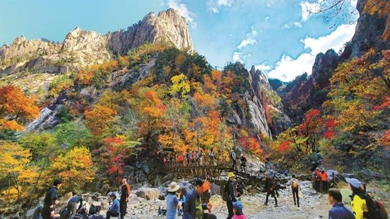 3 Destinasi Wajib Dikunjungi saat Musim Gugur di Korea, Apa Saja?