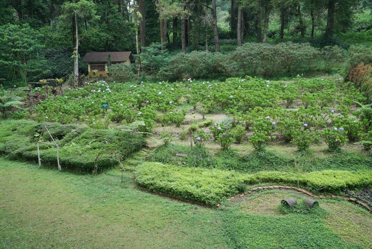 Hamparan Bunga Wana Wisata Baturraden, Spot Foto yang Kece Abis