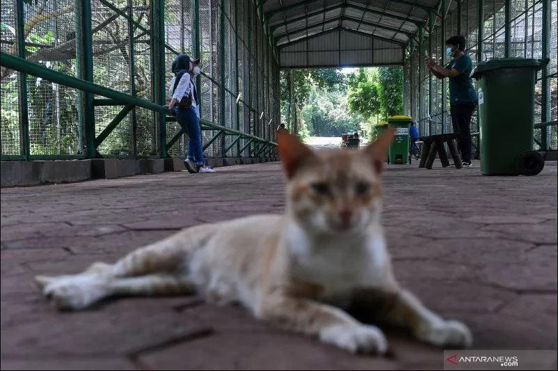 Pengunjung berfoto di Taman Margasatwa Ragunan, Jakarta Selatan, Sabtu (13/3/2021). (Foto: Antara/Sigid Kurniwan)