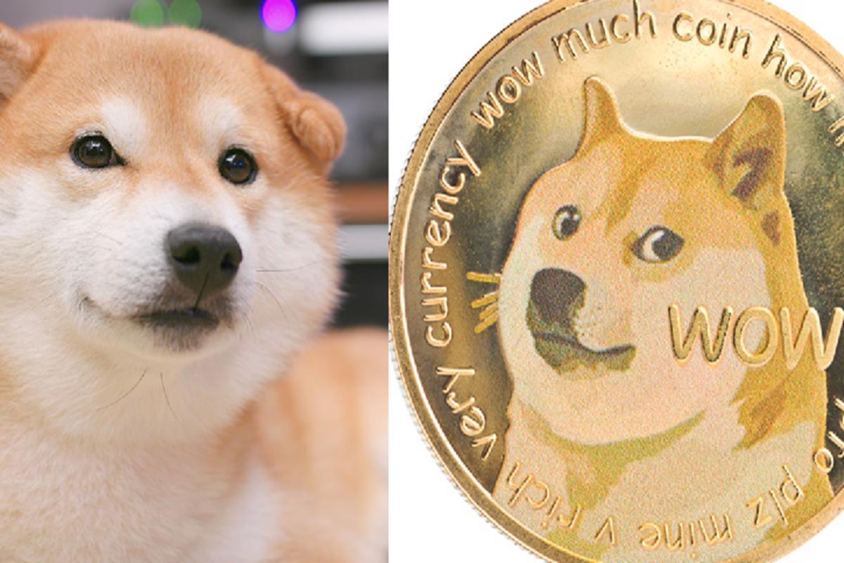 Anjing shiba inu dari Jepang jadi logo kripto Dogecoin (foto: envato)