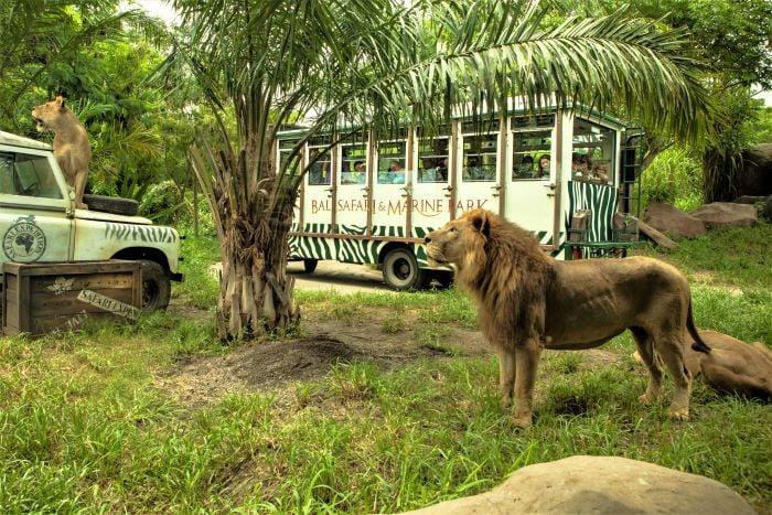 Bali Safari Park. Foto: balisafarimarinepark.com