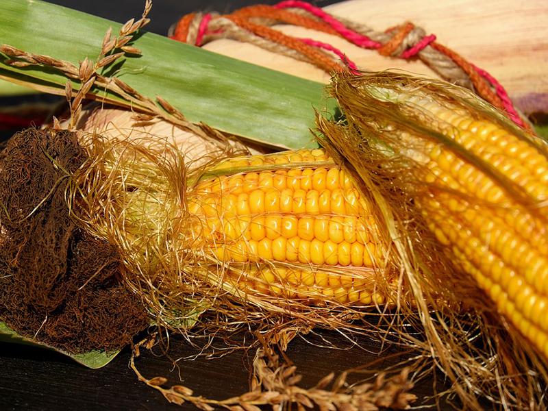 Ilustrasi rambut jagung. Foto: Pixabay