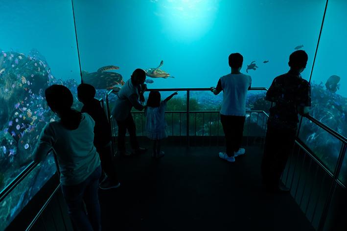Ilustrasi Foto: Dok. Jakarta Aquarium