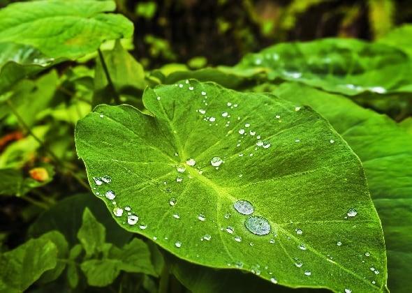 Rutin Minum Air Embun Pagi Ternyata Manfaatnya Sangat Dahsyat! (Foto: Pixabay)