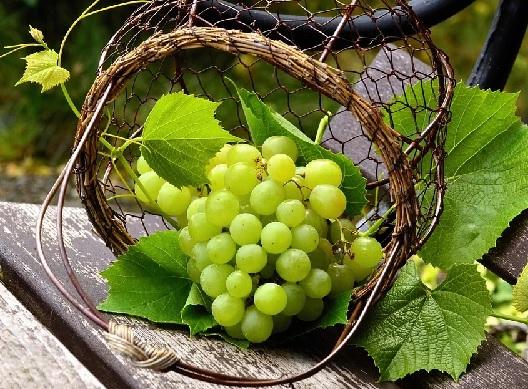 Jangan Dibuang, Manfaat Biji Anggur Ternyata Sangat Dahsyat (Foto: Pixabay)
