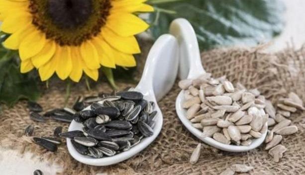 Manfaat Dahsyat Biji Bunga Matahari, Bikin Kolesterol Ambrol (Foto: Boldsky)