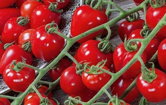Manfaat Buah Tomat Ternyata Tak Bisa Disepelekan