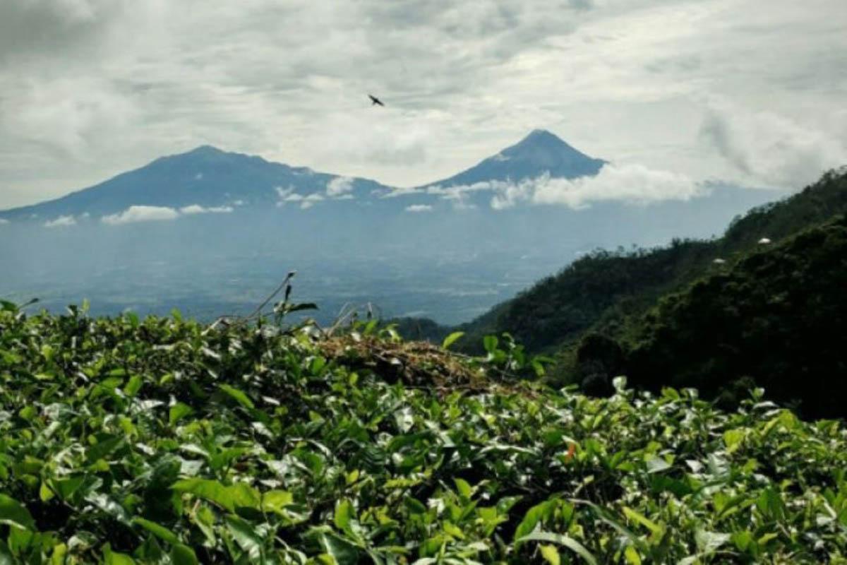 Trisik Hingga Puncak Suroloyo, Ini Wisata Lebaran di Kulon Progo
