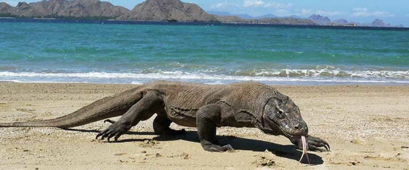 Pulau Komodo di NTT. Foto: Antara