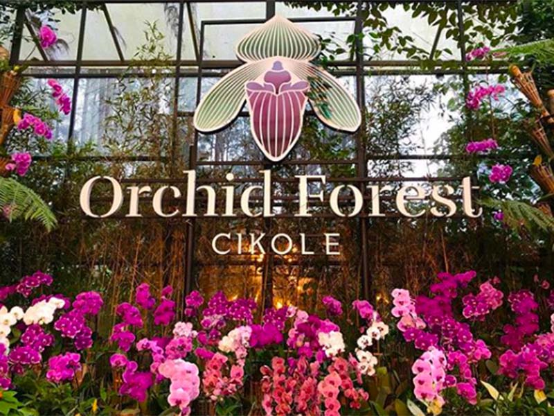 Orchid Forest Cikole, destinasi wisata instagramable di Bandung Utara. Foto: Instagram @orchidforestcikole