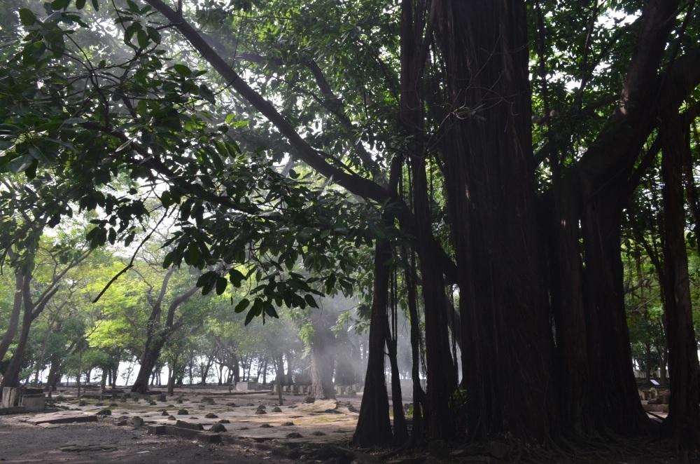 Pohon Keramat di Pulau Onrust (GenPI.co)