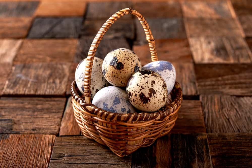 Telur puyuh. Foto: Shutterstock