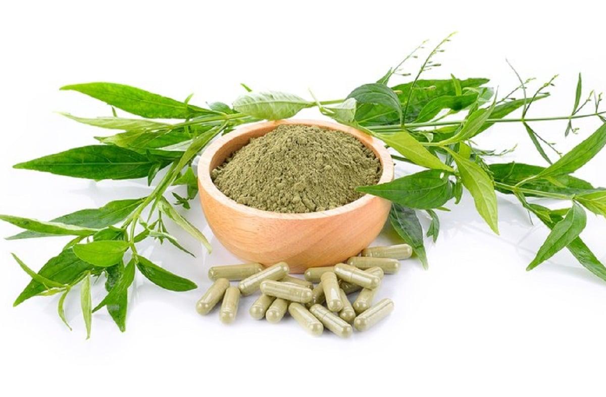 Herbal: Daun Sambiloto Khasiatnya Mengejutkan, Kolesterol Ambrol (Foto: Shutterstock)