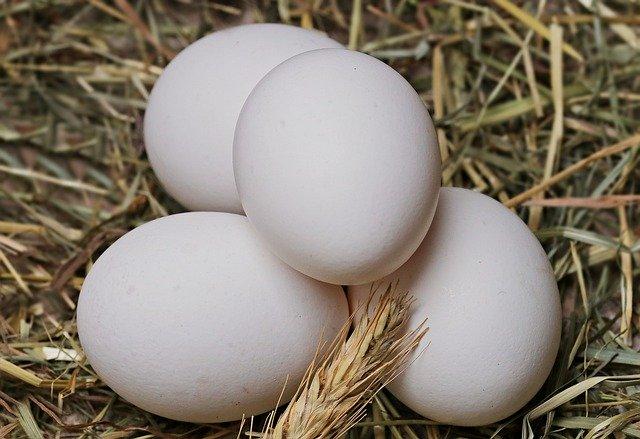 Rutin Makan Telur Ayam Kampung Ternyata Khasiatnya Sangat Dahsyat (Foto: Pixabay)