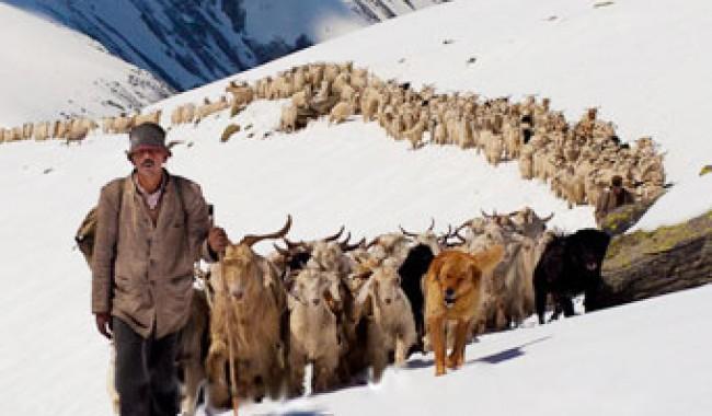 Tak Ada Larangan Poliandri di Himalaya, Istri Punya Banyak Suami